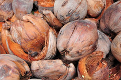 Kokosowy coir Zdjęcia Royalty Free