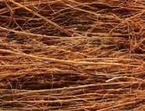 Kokosowy Coir makro- Zdjęcie Royalty Free