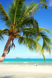 Kokosowy drzewko palmowe Zdjęcia Stock