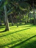 Kokosowy drzewko palmowe Zdjęcia Royalty Free
