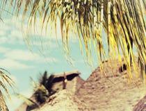 Kokosowy drzewko palmowe liścia zakończenie up Fotografia Stock