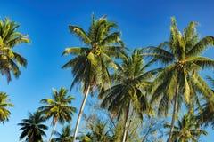Kokosowy drzewko palmowe na jaskrawym niebieskiego nieba tle Obraz Royalty Free