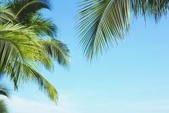 Kokosowy drzewko palmowe opuszcza z niebieskim niebem, tropikalne palmy przy pogodnym letnim dniem zdjęcie royalty free