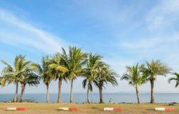 Kokosowy drzewko palmowe wzdłuż jeziora Fotografia Royalty Free