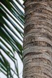 Kokosowy Drzewny bagażnik Zdjęcia Stock
