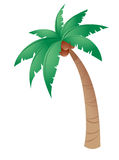 kokosowy drzewo Zdjęcie Stock