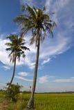 Kokosowy drzewo Obraz Royalty Free