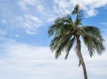 Kokosowy drzewo 5 Zdjęcia Royalty Free