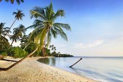 Kokosowy drzewo i morze Zdjęcia Stock
