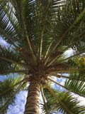 Kokosowy drzewo i niebo Obraz Stock