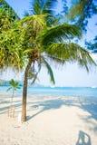 Kokosowy drzewo na huahin plaży Zdjęcie Royalty Free