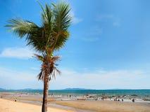 Kokosowy drzewo na niebieskiego nieba i morza głąbika tle Zdjęcia Royalty Free
