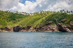 Kokosowy drzewo na Phangan wyspie Zdjęcia Royalty Free