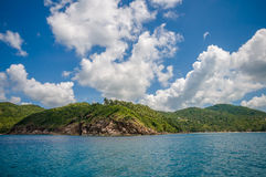 Kokosowy drzewo na Phangan wyspie Zdjęcie Royalty Free