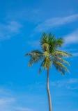 Kokosowy drzewo nad niebieskim niebem obrazy stock