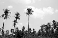 Kokosowy drzewo w czarny i biały tle Zdjęcie Royalty Free