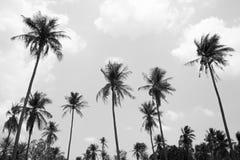 Kokosowy drzewo w czarny i biały tle Zdjęcie Stock