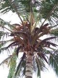 Kokosowy drzewo w mój neighbourhood zdjęcie royalty free
