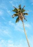 Kokosowy drzewo z jaskrawym nieba tłem Fotografia Royalty Free
