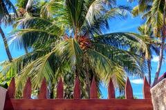 Kokosowy drzewo z kokosowymi owoc przeciw niebieskiemu niebu Natura zwrotniki Zdjęcie Royalty Free