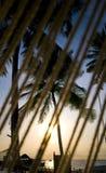 Kokosowy drzewo z kurortu widokiem Obrazy Royalty Free