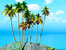 Kokosowy gaj Zdjęcie Royalty Free