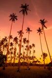 Kokosowy gaj Obrazy Royalty Free