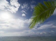 kokosowy liść i morze Obraz Stock