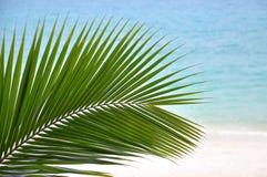 Kokosowy liść obok plaży fotografia royalty free