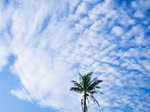 Kokosowy na niebie samotnie obraz royalty free