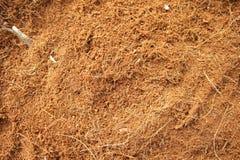 Kokosowy pył Obraz Stock