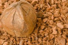 Kokosowy skorupy i koksu spathe włókno dla rolniczego Obraz Stock