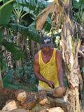 Kokosowy sprzedawca Fotografia Stock