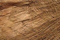 Kokosowych drzew drewniana dokrętka zdjęcia stock