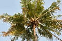Kokosowych drzewek palmowych perspektywiczny widok na exotical tropikalnej wyspie Zdjęcie Stock