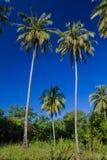 Kokospalm Royaltyfri Fotografi