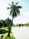 Kokospalm Fotografering för Bildbyråer