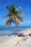Kokospalm alleen op het strand Stock Afbeelding