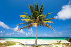 Kokospalm bij strand Royalty-vrije Stock Fotografie