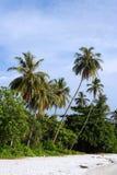 Kokospalm bij Strand Stock Foto's