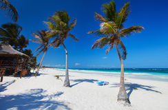 Kokospalm bij strand Stock Afbeelding
