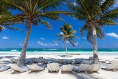Kokospalm bij strand Royalty-vrije Stock Afbeelding