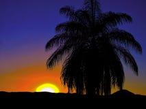 Kokospalm bij zonsondergang in de bergen stock foto's
