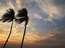 Kokospalm in de hemelzonsondergang Royalty-vrije Stock Foto