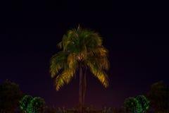 Kokospalm in de Nacht Royalty-vrije Stock Afbeeldingen