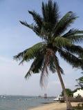 Kokospalm door het strand Stock Foto