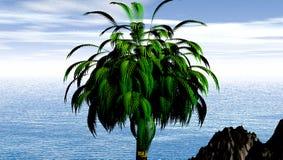 Kokospalm door tropische oceaan Stock Foto