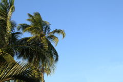 Kokospalm en blauwe hemel royalty-vrije stock fotografie
