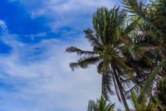 Kokospalm en blauwe hemel bij het strand Stock Foto
