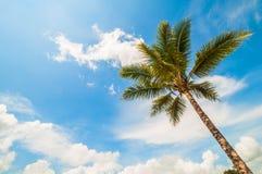 Kokospalm en een blauwe hemel Royalty-vrije Stock Foto's